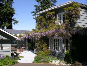 Ext_20Wisteria_20121_20Alders0